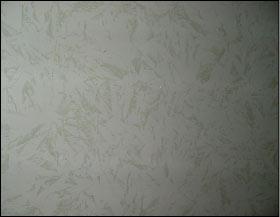 Tipi di pitture for Pareti effetto spugnato